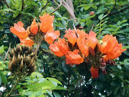 hawaii native plants hawaii plants reshawaii