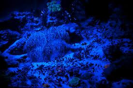 christmas lights net style luminescence christmas lights aquarium style crunchy carpets