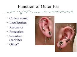 Outside Ear Anatomy Anatomy Of The Ear