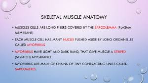 the muscular system functions of muscle producing movement u2013 both