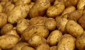 pommes de terre en robe de chambre pommes de terre pourquoi les manger avec la peau passionsanté be
