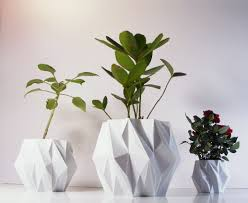 inside house plants add some color 5 cheery easy to grow indoor flowering plants how