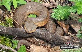 Found A Snake In My Backyard Snake Interrupts Backyard Archery Practice