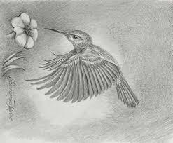 attract birds to your winter garden u2013 gardening in canada