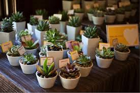 plant wedding favors top 10 beautiful and creative wedding favors topweddingsites