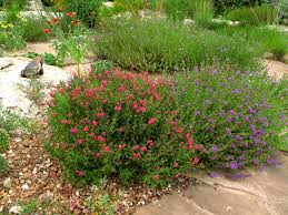 rock small plants for sunken garden