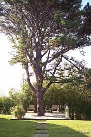 best 25 tree deck ideas on tree house deck tree