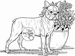 boston terrier dog coloring page for kids animal coloring pages