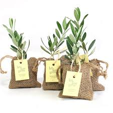 olive favors tree plant favor burlap pouch