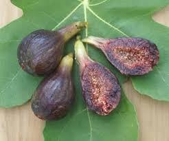 Online Fruit Trees For Sale - brown turkey fig trees for sale order online
