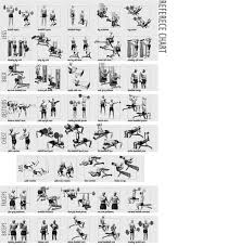 Workout Weight Bench Weight Lifting Chart For Beginners Workout Chart Home Workout