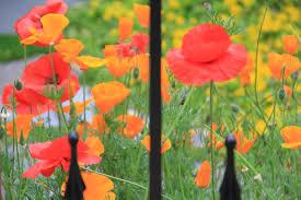native plants portland oregon thankful for almost summer flowers in portland oregon living in