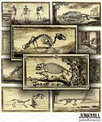 animal anatomy digital printable collage sheet vintage animal