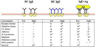 mast cell survival and activation by ige in the absence of antigen