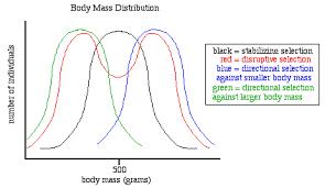 focus sheet evolution
