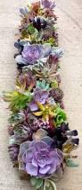 509 best succulents images on pinterest succulents garden