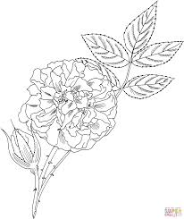 great maiden u0027s blush u0027 alba rose coloring page free printable