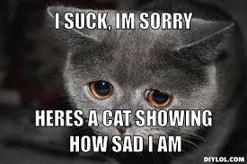 Memes Sorry - 11 purrfect i m sorry memes random funny cat