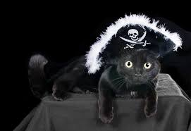 Cat Halloween Costumes Cats 20 Cat Halloween Costume Ideas Pictures Cattime
