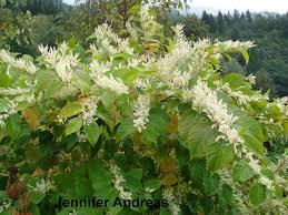 plants native to washington state washington state noxious weed control board