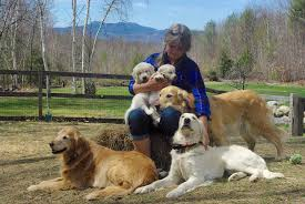 Comfort Retriever Puppies For Sale About Us Salty Dogs Golden Retriever Puppies