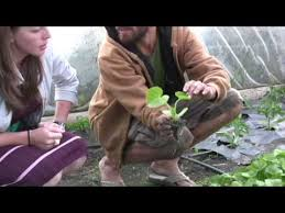 four season farming in the pacific northwest youtube