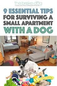 10 Iphone Apps You Can Use To Lead A Frugal Life by 9 Essential Tips For Surviving A Small Apartment With A Dog The