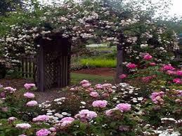 Fort Bragg Botanical Garden Mendocino Coast Botanical Gardens In Fort Bragg California On