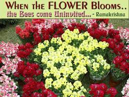Nice Flowers Flowers Image Quotes And Sayings Page 1