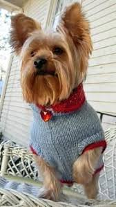 86 best dogs yorkie sweaters and images on pinterest