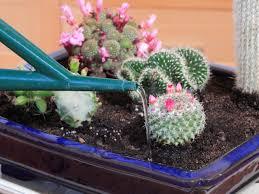 create an indoor desert garden hgtv