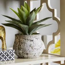 Plant Vase Indoor Plants You U0027ll Love Wayfair