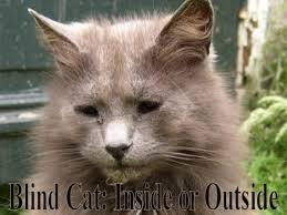 Blind Cat Sanctuary How To Take Care Of A Blind Cat In The Best Way Pethelpful
