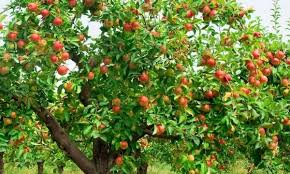the best time to plant a fruit tree or fall smart tips