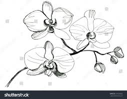 hand drawing orchid flower sketch stock illustration 197239562