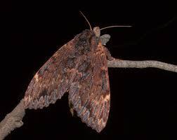 growing more butterflies in south east queensland gecko hills to stuart rae