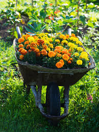 perennial plants for fall perennial flowers hgtv decoration mums in window boxes best plants to grow in autumn