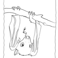 hanging bat coloring page kids drawing and coloring pages marisa
