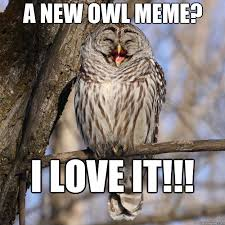 Funny Owl Meme - a new owl meme i love it easily amused owl quickmeme