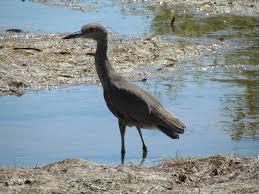 Florida birds images More south florida birds part 1 help me identify a bird jpg