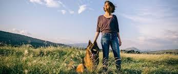 belgian sheepdog ohio puppies in columbus ohio adopt your next best friend today
