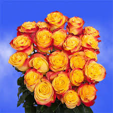 Global Roses Yellow And Orange Roses New Flash Variety Global Rose