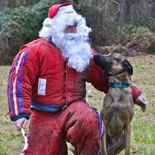 belgian malinois us secret service 52 best belgian malinois dog breed images on pinterest