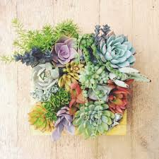 vertical succulent planter awesome stuff to buy