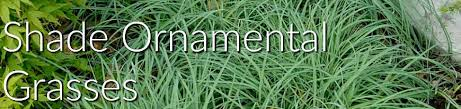 ornamental grasses for shade greatgardenplants