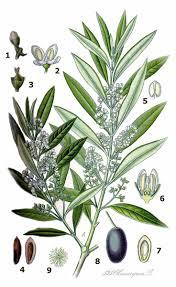 20 best recent plants images on pinterest plants plant species