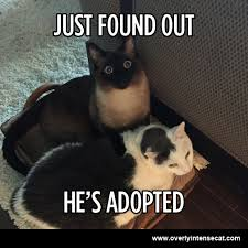 Adoption Meme - cat adoption