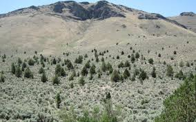 native idaho plants idaho land managers get federal grant to remove plants that