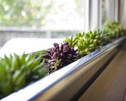 amazing of finest fresh indoor plant glass door modern ho 6031