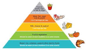 food pyramids bioninja